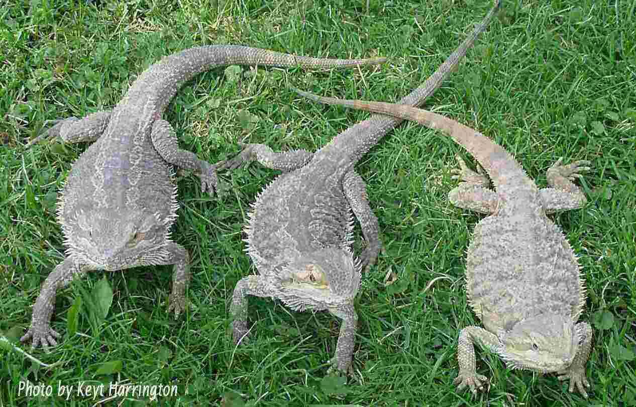 Lizards outside-300 pixels